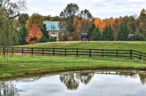 Middleburg Virginia Horse Country